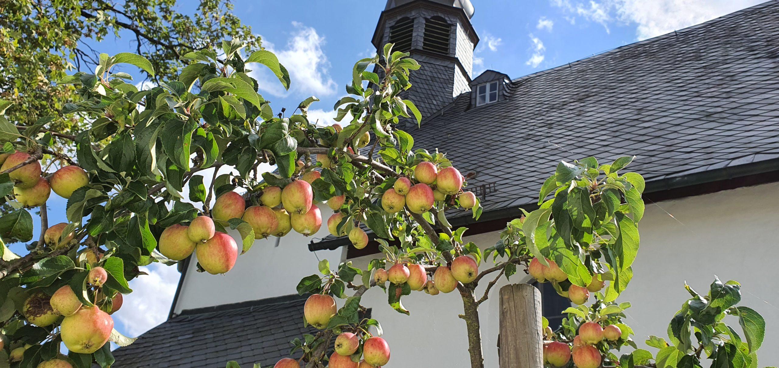 Apfelbäumchen im Kirchgarten